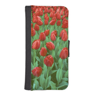 Tulip field blooms in the spring. wallet phone case for iPhone SE/5/5s