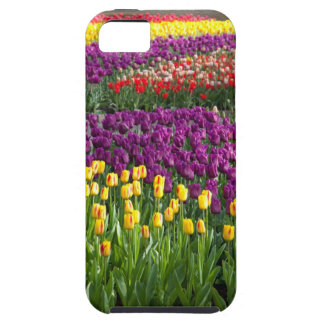 Tulip Field iPhone 5 Covers
