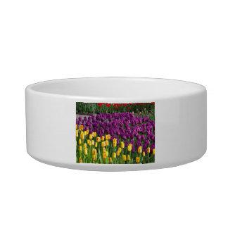 Tulip Field Cat Water Bowls