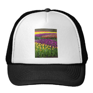 Tulip Field Trucker Hats