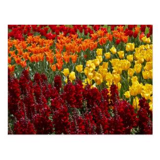Tulip Field Postage Postcard