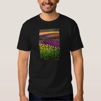 Tulip Field Shirts