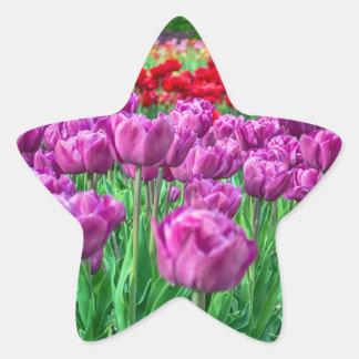 Tulip Field Star Sticker
