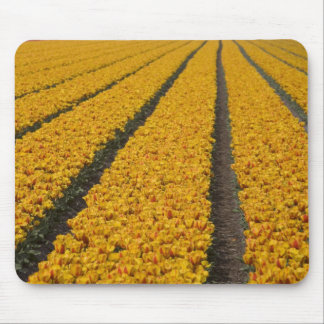 Tulip field, The Netherlands Mouse Pad