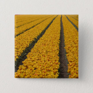 Tulip field, The Netherlands Pinback Button