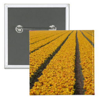 Tulip field, The Netherlands Pinback Button