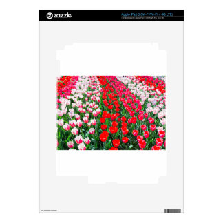Tulip field with various red tulips in rows decals for iPad 3