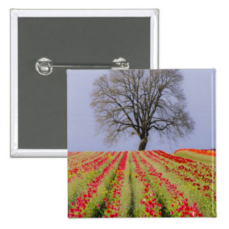 Tulip fields and a lone oak tree located near button