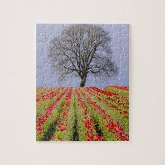 Tulip fields and a lone oak tree located near jigsaw puzzle