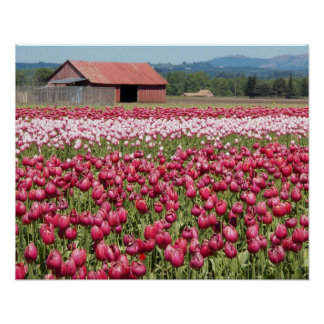 Tulip Fields Floral Photo Poster