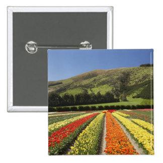 Tulip Fields, near Tapanui, West Otago, South 2 Pins