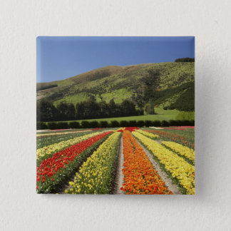 Tulip Fields, near Tapanui, West Otago, South 2 Pinback Button