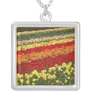 Tulip Fields, near Tapanui, West Otago, South Custom Necklace