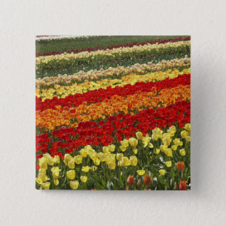 Tulip Fields, near Tapanui, West Otago, South Pinback Button