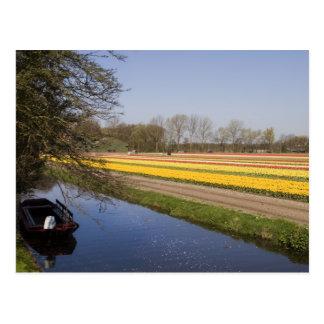 Tulip fields postcard