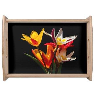 Tulip flowers against black background
