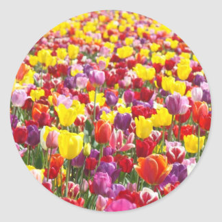 Tulip Flowers Festival stickers Colorful Tulips