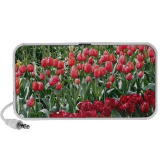 Tulip flowers in bloom 4 travel speaker