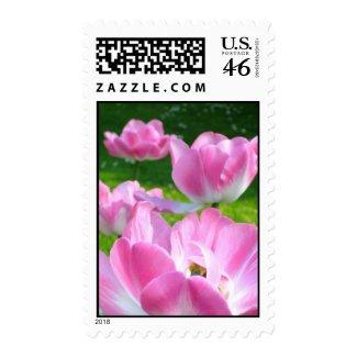 Tulip flowers stamp