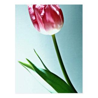 Tulip flowers postcard