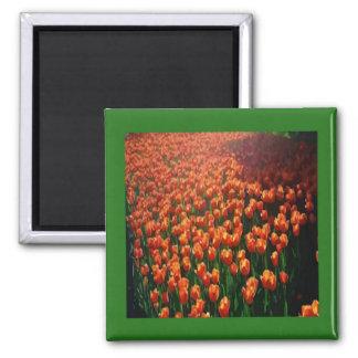 Tulip Focus Magnet