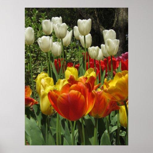Tulip Garden 2 Print
