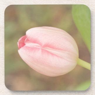 Tulip Garden Coasters
