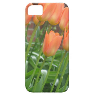 Tulip Garden iPhone 5 Case