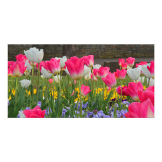 Tulip Garden Photocard Photo Card