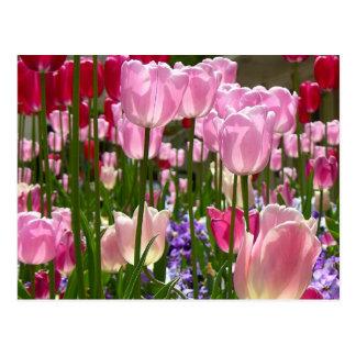 Tulip Garden Postcard