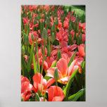 Tulip garden posters