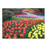"Tulip Gardens 5"" X 7"" Invitation Card"
