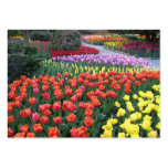 Tulip Gardens Business Card Template