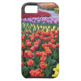 Tulip Gardens iPhone 5/5S Cover