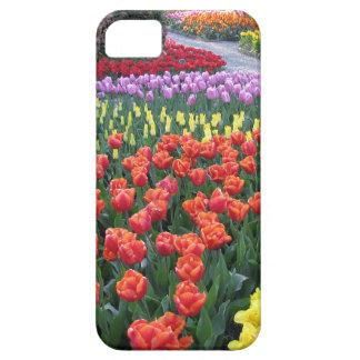 Tulip Gardens iPhone 5/5S Case