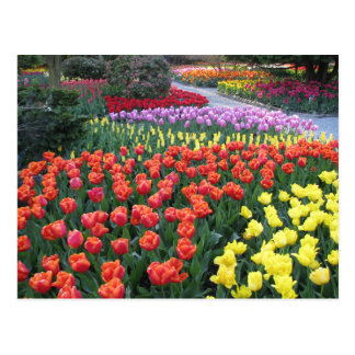 Tulip Gardens Postcard