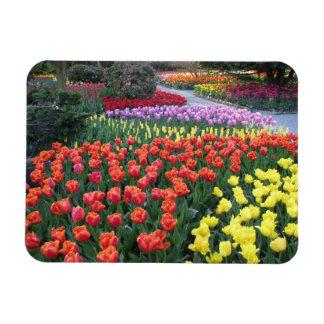 Tulip Gardens Rectangular Photo Magnet