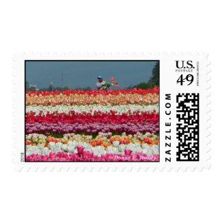 Tulip Harvest Stamp