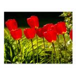 tulip impressions post cards