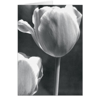 Tulip in Black and White Greeting Card