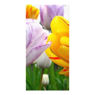 Tulip Love Card