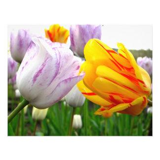 Tulip Love Flyer