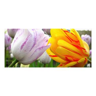 Tulip Love Rack Card