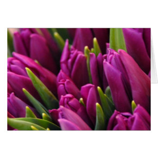 Tulip Market Card