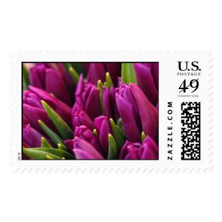 Tulip Market Postage Stamp