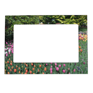 Tulip Meadow Magnetic Frame