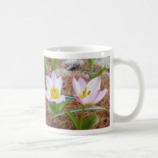 Tulip Melange ~ mug