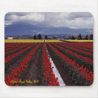 Tulip Pano Tulips Skagit Valley WA Mouse Pads