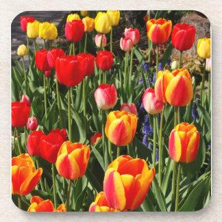 Tulip Patch Coaster