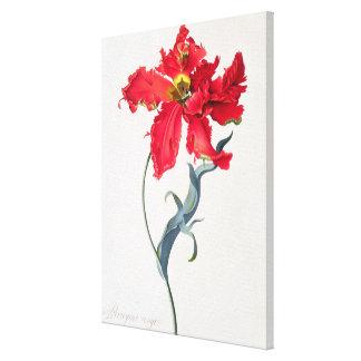 Tulip: Perroquet Rouge Canvas Print